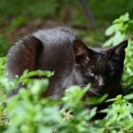 gato para web