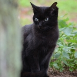 gato web