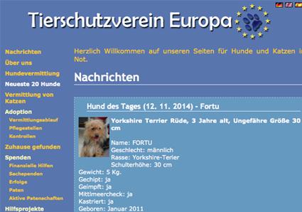 tierschutzverein-europa